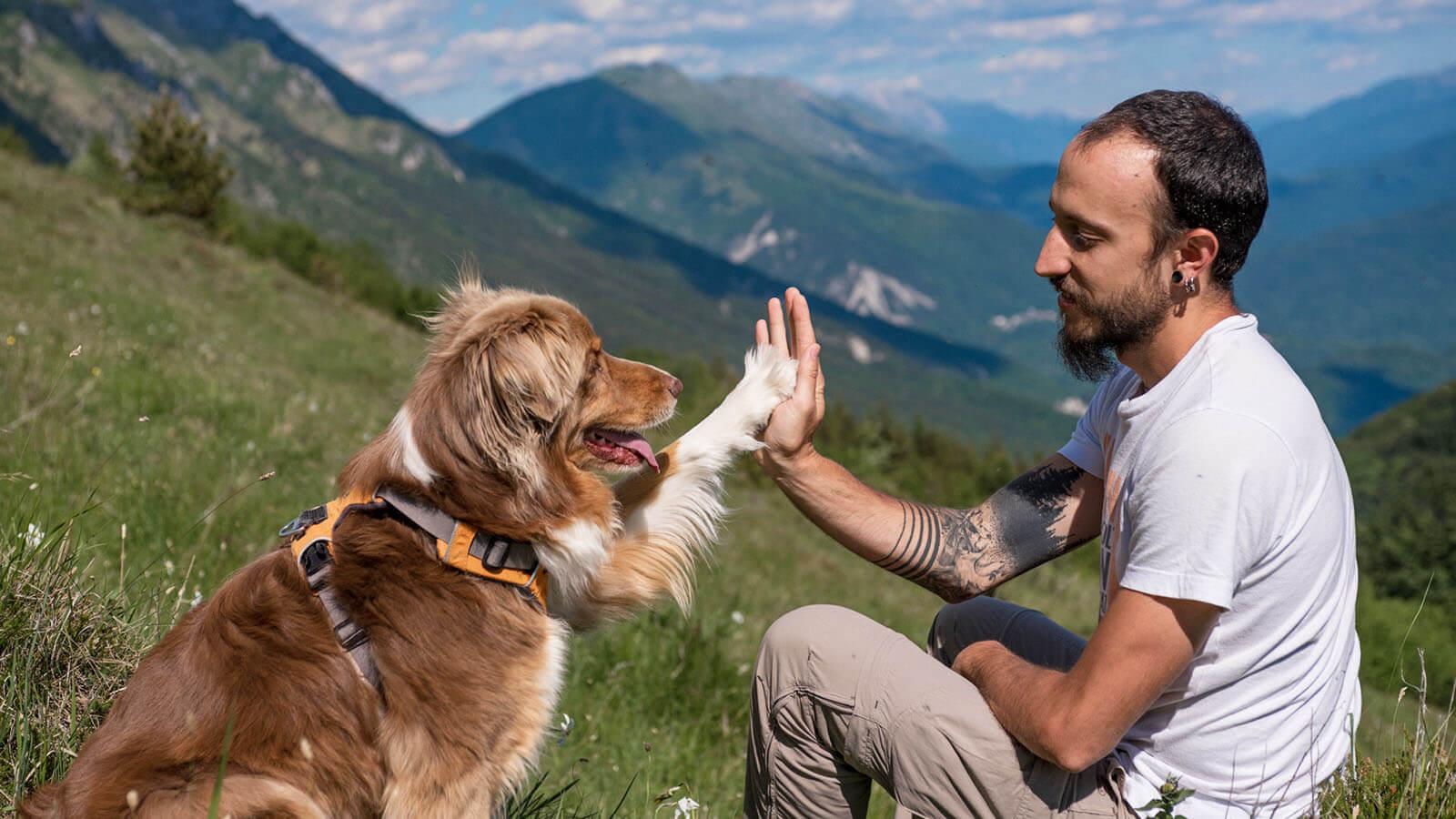 Francesco Desomaro educazione cinofila a Udine e provinca