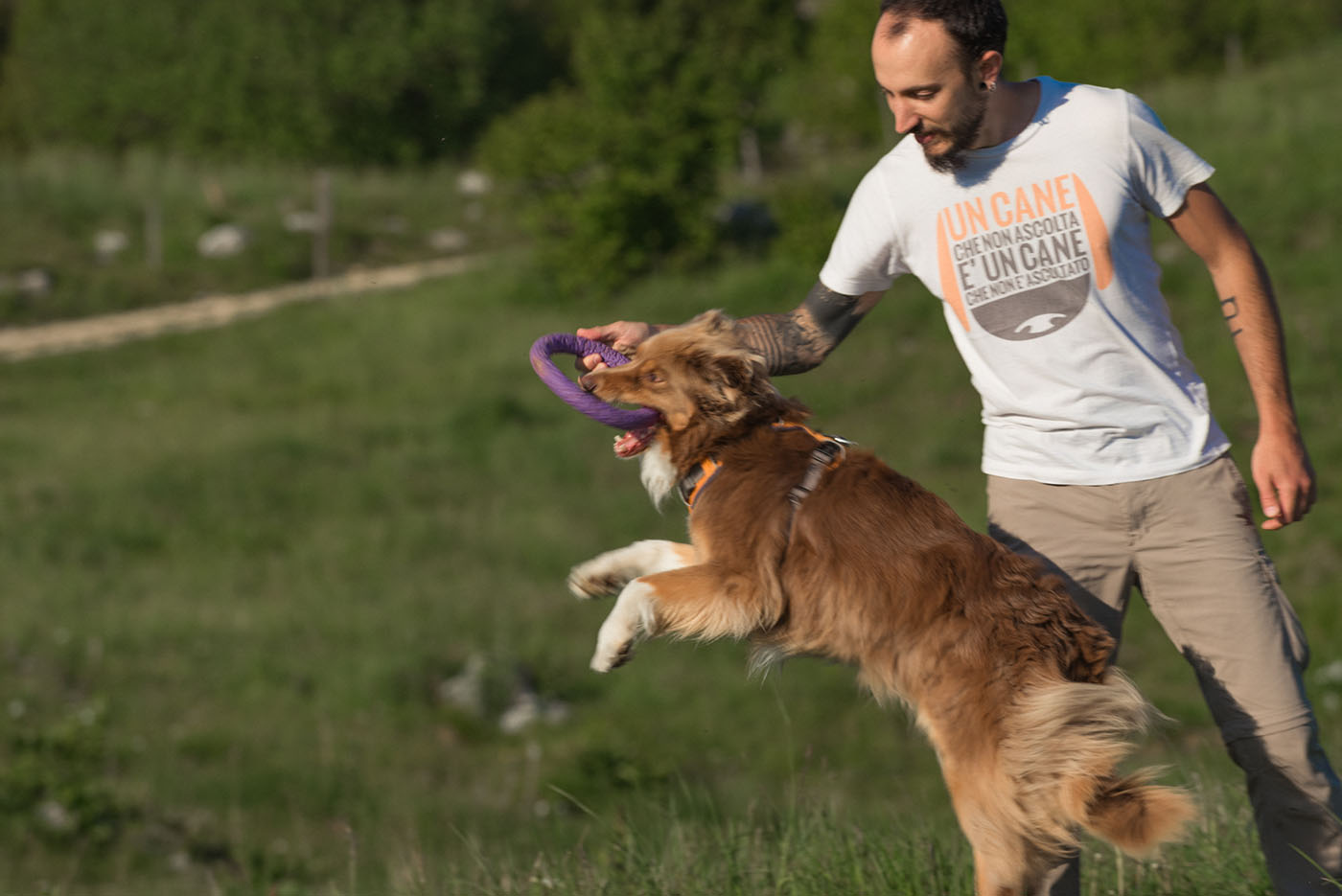 Dog sitter a Udine e provincia - Francesco Desomaro educatore cinofilo